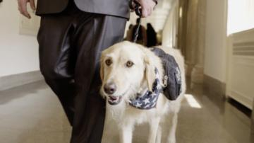 Connecting heroes with helpers: What is the PAWS Act? | Capitol Hill Brief